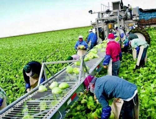 ΥΠΟΜΕΤΡΟ 6.3 του πριμ των 14.000 ευρώ «Ανάπτυξη μικρών γεωργικών εκμεταλλεύσεων»