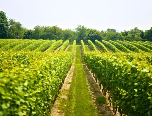 Αγροτικά δάνεια έως 25.000 ευρώ χωρίς ασφαλιστική ενημερότητα